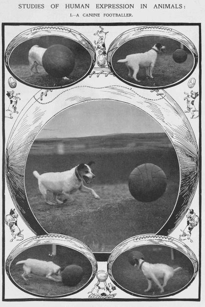 pompey dog sketch jan 9 1907